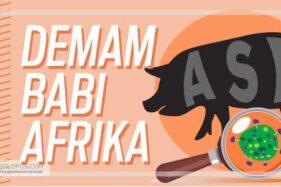 Infografis Demam Babi Afrika (Solopos/Whisnupaksa)