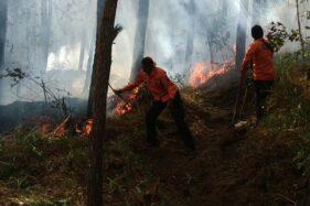 Petugas gabungan berusaha memadamkan api yang membakar Gunung Lawu di wilayah Kabupaten Magetan, Jawa Timur, Minggu (17/11/2019). (Istimewa/BPBD Magetan)