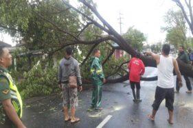 Pohon tumbang diterpa angin kencang di Kadilangu, Baki, Sukoharjo, Sabtu (16/11/2019) sore. (Solopos-Indah Septiyaning W.)