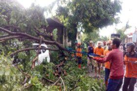 Tim BPBD bersama warga mengevakuasi mobil Toyota Calya yang tertimpa pohon di jalan raya Bekonang- Sukoharjo, Senin (11/11/2019). (Istimewa)