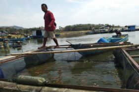 Petani ikan mendaratkan ikan di Waduk Gajah Mungkur (WGM), Cakaran, Desa Sendang, Wonogiri, Selasa (19/11/2019). (Solopos/Cahyadi Kurniawan)