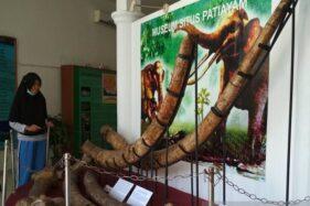 Museum Patiayam Kabupaten Kudus, Jawa Tengah. (Antara-Akhmad Nazaruddin Lathif)