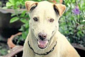 Hiii.... Kasus Anjing Gigit Manusia Masih Terjadi Di Sukoharjo, 10 Orang Jadi Korban