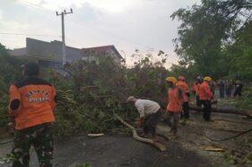 Petugas BPBD Ponorogo bersama sukarelawan membersihkan pohon tumbang yang disebabkan karena angin kencang, Sabtu (7/12/2019). (Istimewa-BPBD Ponorogo)
