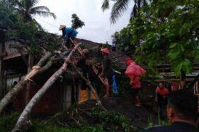 Warga bergotong royong menyingkirkan pohon tumbang yang menimpa sebuah rumah di Magelang, Jawa Tengah, Sabtu (7/12/2019). (Antara-BPBD Kabupaten Magelang)