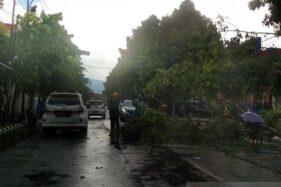Pohon di Jl. R.A. WIryaatmaja (Jalan Bank), Purwokerto, Kabupaten Banyumas, Jawa Tengah tumbang akibat hujan lebat disertai angin kencang, Sabtu (7/12/2019) siang. (Antara-Sumarwoto)