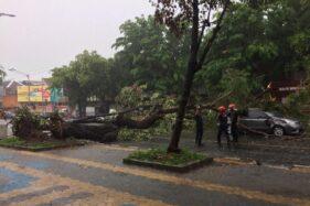 Mobil Wisatawan Kediri Penyok Tertimpa Pohon Tumbang di Jl. Slamet Riyadi Solo