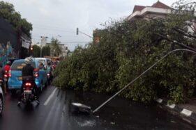 Pohon beringin tumbang menutup akses jalan di Jl. R.M. Said, Ketelan, Banjarsari, Solo, Selasa (10/12/2019). (Solopos/Nicolous Irawan)