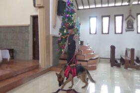 Anjing Pelacak Bantu Polisi Sterilkan Gereja di Boyolali