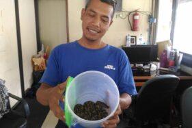Petugas kebersihan Balai Kota Solo, Suyut, menunjukkan ular sanca kembang yang berhasil ditangkap,Kamis (12/12/2019). (Istimewa)