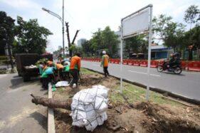 Petugas DLH Solo memindahkan pohon yang terdampak flyover Purwosari di Jl. Slamet Riyadi, Kerten, Laweyan, Senin (13/1/2020). (Solopos/Nicolous Irawan)