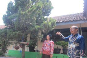 Lempari Sarang dengan Kerikil, 4 Siswa SMP Trucuk Klaten Disengat Tawon Vespa