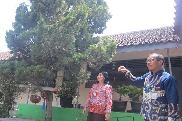 Kepala SMPN 1 Trucuk, Titin Windiyarsih (kiri) saat menunjukkan pohon cemara yang sempat terdapat sarang tawon di kompleks sekolahnya, Selasa (21/1/2020). (Solopos/Ponco Suseno)