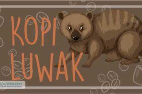 Infografis Kopi Luwak (Solopos/Whisnupaksa)