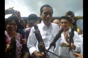 Narasi Foto Jokowi Ajak Makan Tikus Bakar? Cek Faktanya