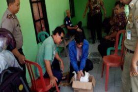Petugas Dinas Pertanian, Pangan, dan Perikanan Kabupaten Karanganyar memeriksa dan mendata kucing di Jaten, Selasa (28/1/2020). (Istimewa-Camat Jaten)