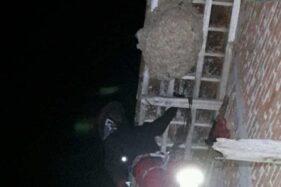 Anggota Tim Rescue Damkar Kabupaten Temanggung mengevakuasi sarang lebah. (Antara-Tim Rescue Damkar Kabupaten Temanggung)