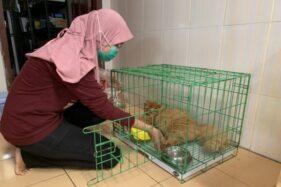 Dokter Hewan Linda Kristina Indriati memeriksa kucing di Klinik Hewan Linda, Karanganyar, Rabu (29/1/2020). (Solopos/Candra Mantovani)