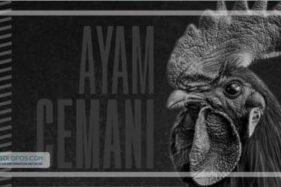 Infografis Ayam Cemani (Solopos/Whisnupaksa)
