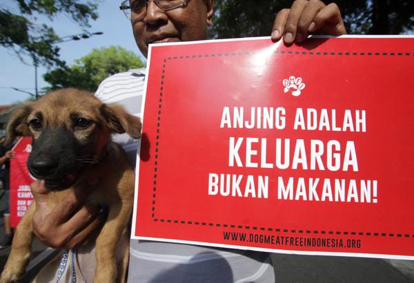Terungkap! Kecamatan di Sragen Ini Jadi Pemasok Daging Anjing Terbesar di Soloraya