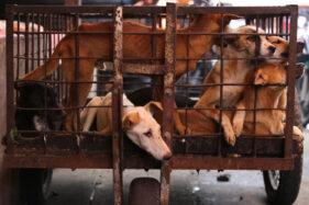 Astaga! Pengepul Anjing di Sragen Jual Beras untuk Beli Anjing di Jabar dan Jatim
