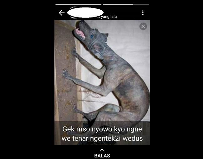 Status WA salah satu warga Wonogiri berisi foto hewan yang disebut sebagai pemangsa kambing di Ngambarsari, Karangtengah. (Istimewa)