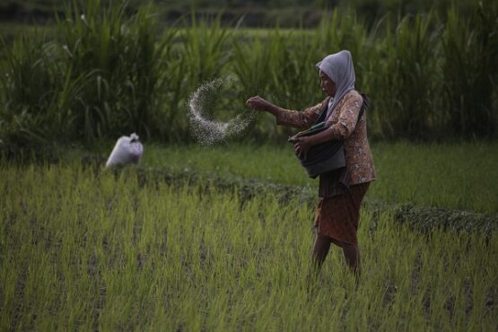 Ilustrasi petani menebar pupuk. (Antara/Hendra Nurdiyansyah)