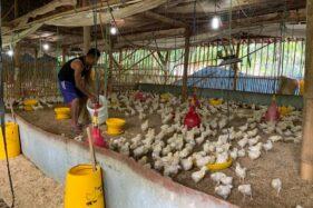 Antisipasi Flu Burung, Pemkab Karanganyar Siapkan 10.000 Vaksin Unggas