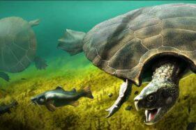 Ilustrasi kura-kura raksasa Stupendemys geographicus. (livescience.com)