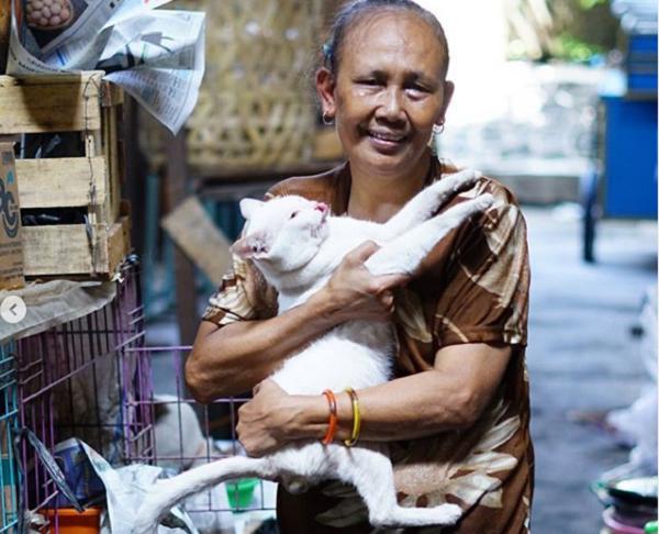 Cerita Mbah Sendang, Pedagang Pasar Jongke Solo Pelihara Puluhan Kucing Telantar