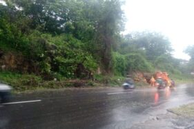 Pohon tumbang di kawasan Jurug, Jebres, Solo, Selasa (18/2/2020). (Solopos/Wahyu Prakoso)