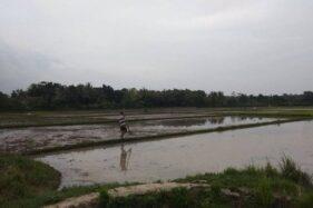 Aktivitas petani di Kabupaten Lebak, Banten, kembali melakukan penanaman padi sawah, hortikultura, dan palawija setelah dilanda kemarau hingga tujuh bulan lalu. (Antara)
