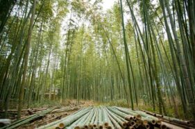 Ilustrasi bahan bangunan bambu (freepik)