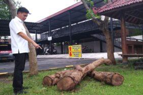 Tebang 27 Pohon Sonokeling, Tiga Orang Ditangkap Polres Madiun