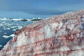 Ganggang Merah Antartika Bisa Pengaruhi Perubahan Iklim