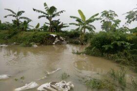 Tanggul Sungai Situri Lagi-Lagi Jebol, Petani dan Pemdes Grogol Sukoharjo Menyerah