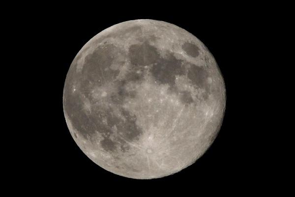 Worm Full Moon Alias Bulan Besar Cacing Tampak Bes