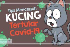 Infografis Kucing Tertular Covid-19 (Solopos/Whisnupaksa)