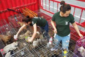 Setelah Wabah Corona, Kota-Kota di China Terbitkan Larangan Makan Kucing