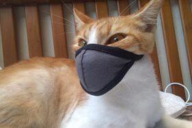 Bisa Saling Menularkan, Covid-19 di Kucing Lebih Bahaya Karena Ini