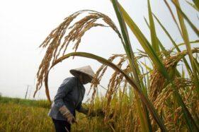 Di Tengah Pandemi Corona, Petani Pati Didorong Terus Jaga Produksi