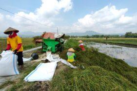 Pandemi Covid-19 Tak Pengaruhi Produksi Pertanian Wonogiri