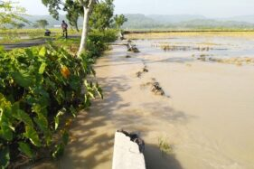 Tanggul Jebol Banjiri Sawah Di Sukoharjo, Lagi-Lagi Sungai Situri