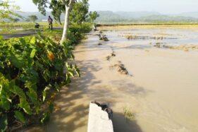 Konsidi lahan pertanian yang terendam banjir akibat jebolnya tanggul Sungai Situri di Desa Grogol, Weru, Sukoharjo, Rabu (1/4/2020). (Istimewa/Heri Putut)