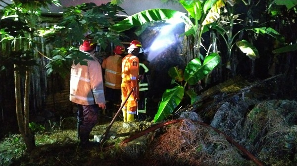 Gudang Jerami Kebakaran, Empat Ekor Sapi di Tawangsari Sukoharjo Nyaris Terpanggang
