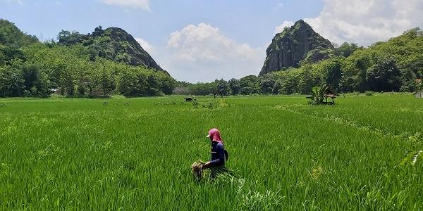 Seluruh Tempat Wisata di Sukoharjo Dibuka untuk Umum, Kecuali Ini