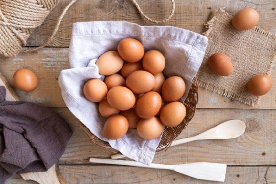 harga telur sragen makanan tinggi lemak
