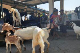 Kembali Dibuka, Pasar Hewan di Madiun Masih Sepi