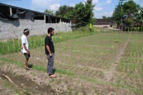 Pos Amal Urip Bareng, Cara Warga Klaten Bangun Ketahanan Pangan Lokal