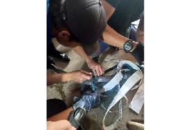 Petugas Pemadam Kebakaran (Damkar) mengevakuasi indukan ular kobra yang terjebak di net voli SMK Veteran Sukoharjo, Senin (13/7/2020). (Solopos/Indah Septiyaning W.)